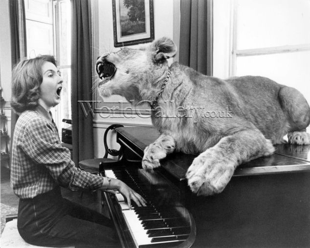 Lion singing with a piano player